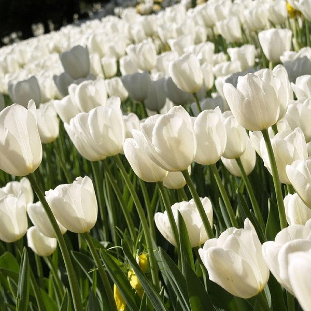 الزهور مع الزهور الصغيرة الزهور بيضاء الأسماء والأوصاف والصور من الزهور البيضاء