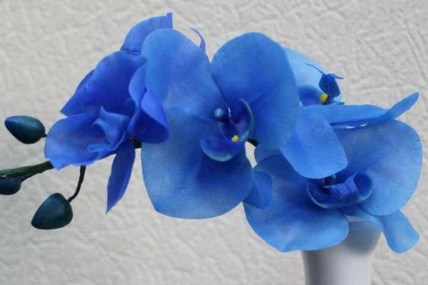 26ef8e34dcb63 يحدث تلوين أزرق أرجواني حقًا ومن الممكن جدًا الحصول على زهرة بهذا اللون غير  المعتاد. إن معرفة ما إذا كانت غير مزيفة أمامك أمر بسيط بما يكفي  فأنت بحاجة  إلى ...