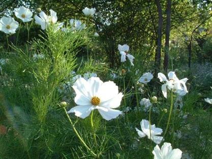 Que Flor Florece En La Tarde Interesante En El Mundo De La Biologia