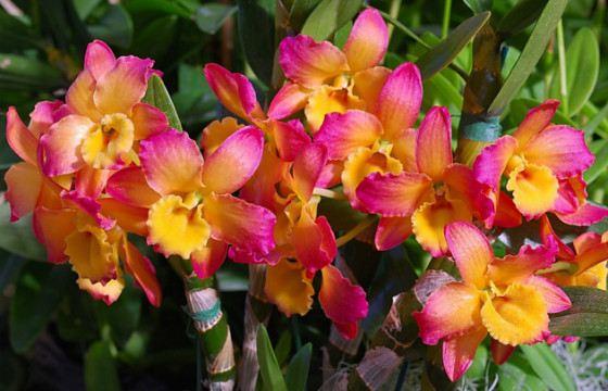 La Flor Mas Elegante Las Fotos De Flores Son Increiblemente Hermosas