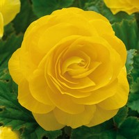 Mostrar Flores De Jardin Flores Perennes Flores Amarillas Flores